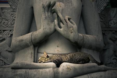 Kat slapen op de schoot Boeddhabeelden Stockfoto