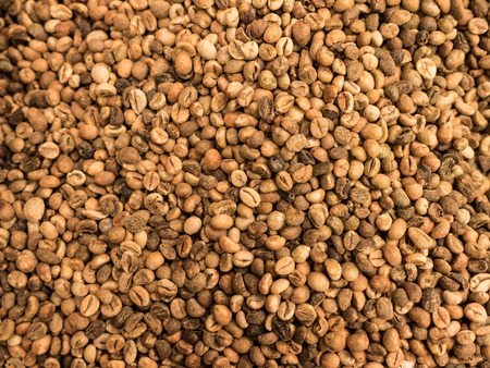 comida arabe: Granos de caf� caf� secados se preparan para asar como tel�n de fondo de imagen o de fondo.