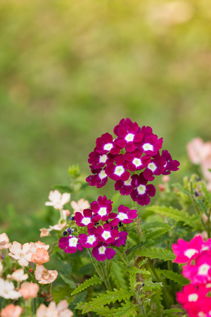 Flowers in the small garden, blur background.