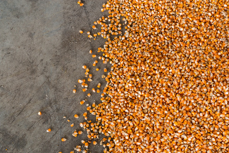 Corn after the milling on the cement floor. Stock Photo