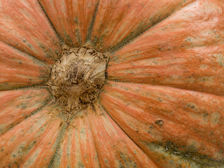 Macro view of giant, vibrant orange pumpkin background, shallow DOF