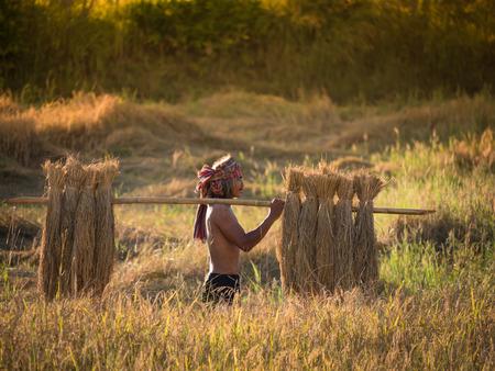 Thaise landbouwer die de rijst op de schouder na de oogst, boer werk om de rijst te houden om te worden verkocht. Stockfoto