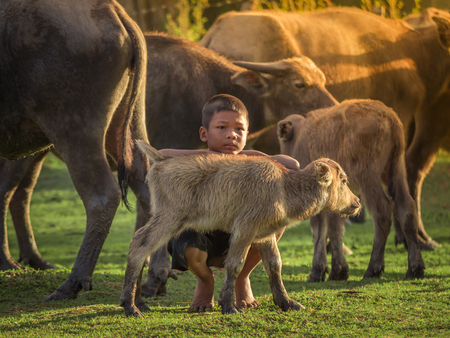 Asian children and buffalo at countryside. Stockfoto