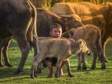 Aziatische kinderen en buffels op het platteland.