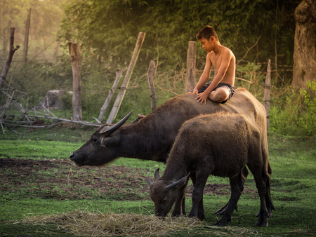 Child riding buffalo in countryside Thailand. Stock Photo