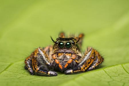 Spinnende Spider op groen blad.