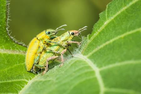 Insecten fokken op een groene bladeren.