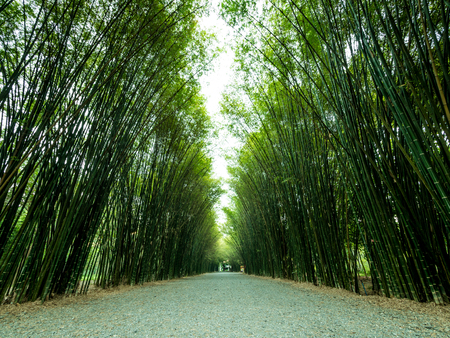 Tunnel bamboo trees and walkway, Banna district, Nakhonnayok province in Thailand. Stockfoto