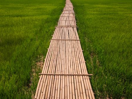 Rural Green rice fields and bamboo bridge.