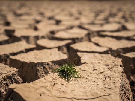 Kleine grasgroei op gedroogde en gebarsten grond in dorre seizoen. Stockfoto