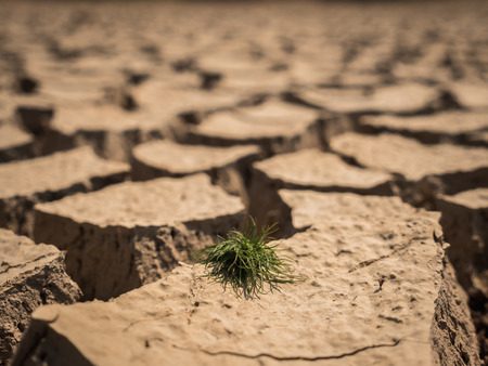 Small grass growth on dried and cracked soil in arid season.