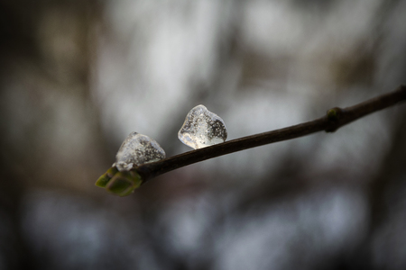 icicles on a branch - icy branch Stock Photo