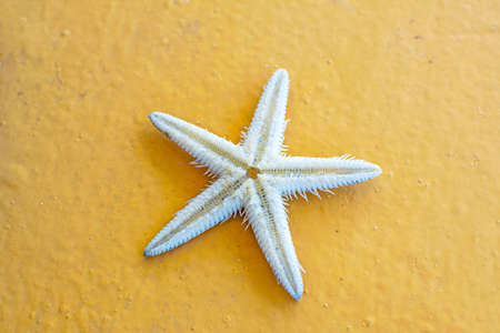 Close-up starfish on orange background. Amazing white starfish. Stock fotó