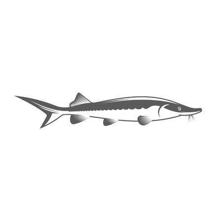 sturgeon: Vector illustration of a sturgeon in the old-fashioned style and line-art style. Can be used as a tattoo