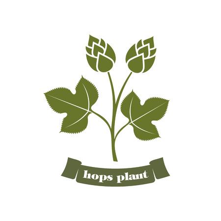 brewery  hops: illustration hops on a white background hops plant, hop leaves, hop symbol, beer symbol, brewery emblem