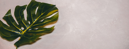 Tropical leaves Monstera on light pink background. Flat lay, top view