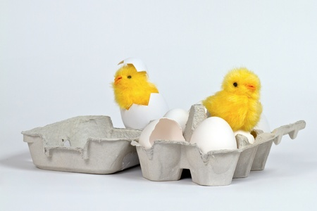 Newly hatched toy chicks in eggbox with white eggs. Hi-key Stock Photo