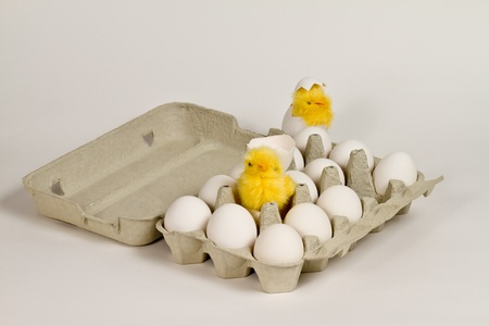 Newly hatched toy chicks in eggbox with white eggs. photo