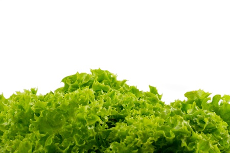 Photo of green lettuce with white background Stock Photo