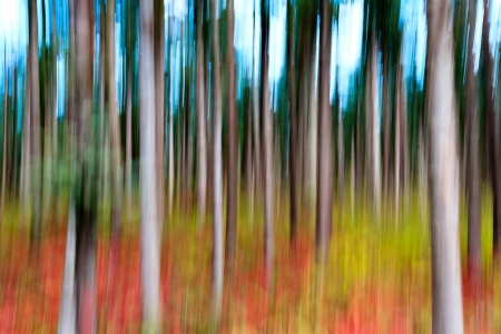 Abstract panning view of forrest