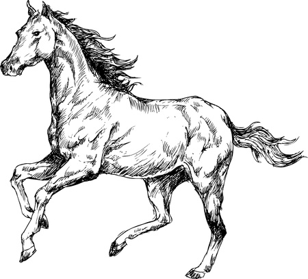 dressage: Chevaux dessin�s � la main Illustration