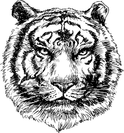 panthera: Tiger head hand drawn Illustration