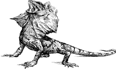 Hand drawn basilisk lizard Illustration