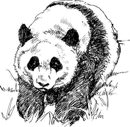 Panda hand getrokken