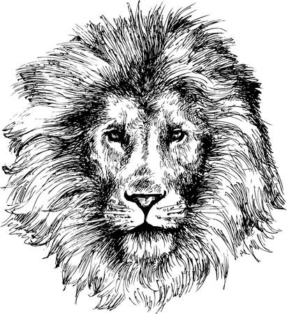lion dessin: Tête de lion tiré par la main Illustration