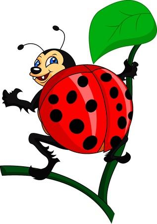 coccinellidae: bug cartoon