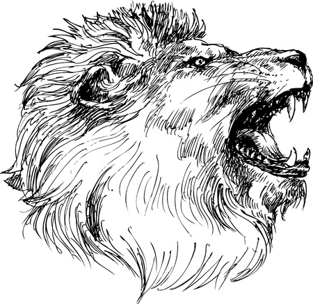 lion head: lion head hand drawn