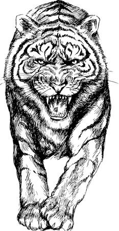 hand getekende tijger Stock Illustratie