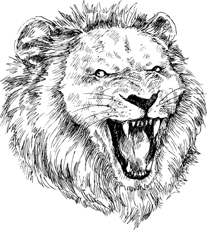 dangerous lion: hand drawn lion head