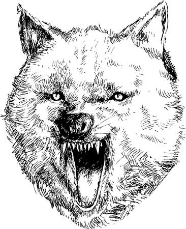 back of head: hand drawn wolf head