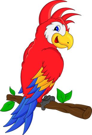 macaw: macaw bird cartoon Illustration