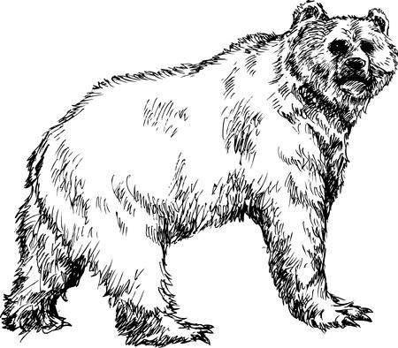 hand drawn bear Stock Vector - 23513425
