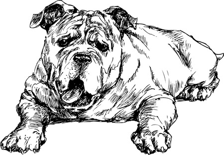 beware of the dog: hand drawn english bulldog