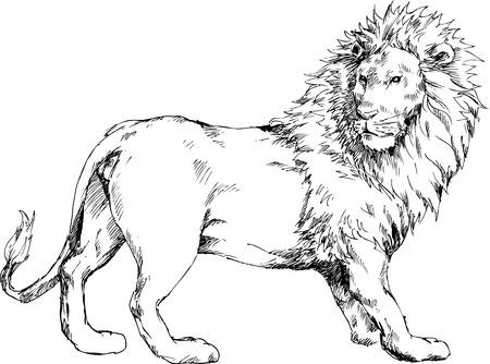 Lion tiré par la main Banque d'images - 23513428