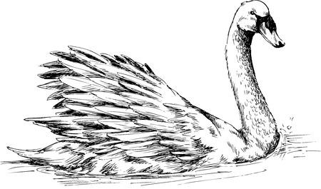 swimming swan: hand drawn duck