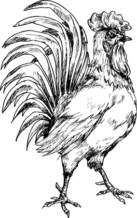 hand drawn rooster
