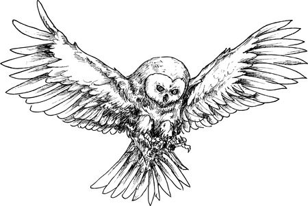 prey: hand drawn owl