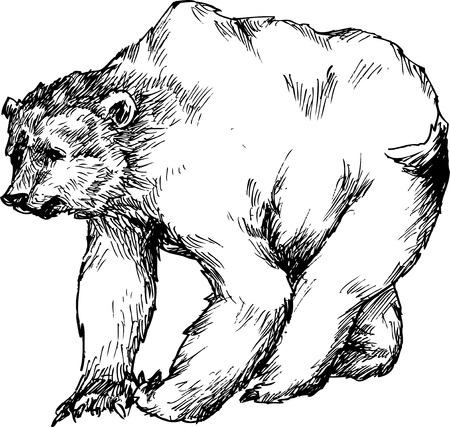 hand drawn bear Stock Vector - 25778317