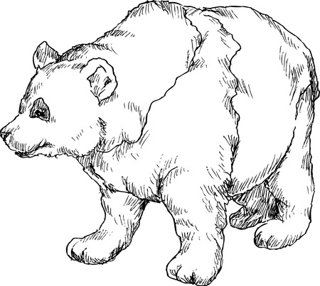one panda: hand drawn panda