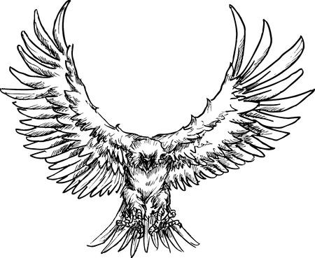 aguila americana: águila dibujado a mano