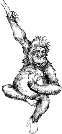 hand drawn monkey hanging Vector