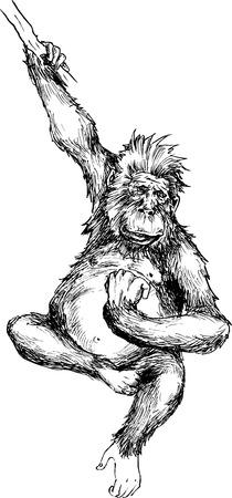 hand drawn monkey hanging Vector