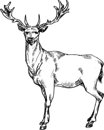 обращается: рисованной олень