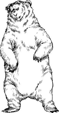 hand drawn bear Stock Vector - 25778366