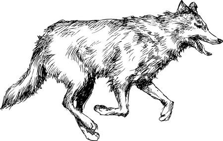 hand drawn wolf Vector