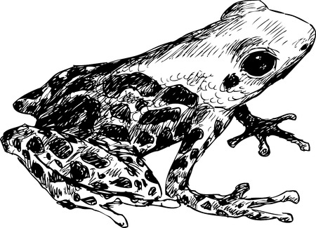 croaking: hand drawn frog